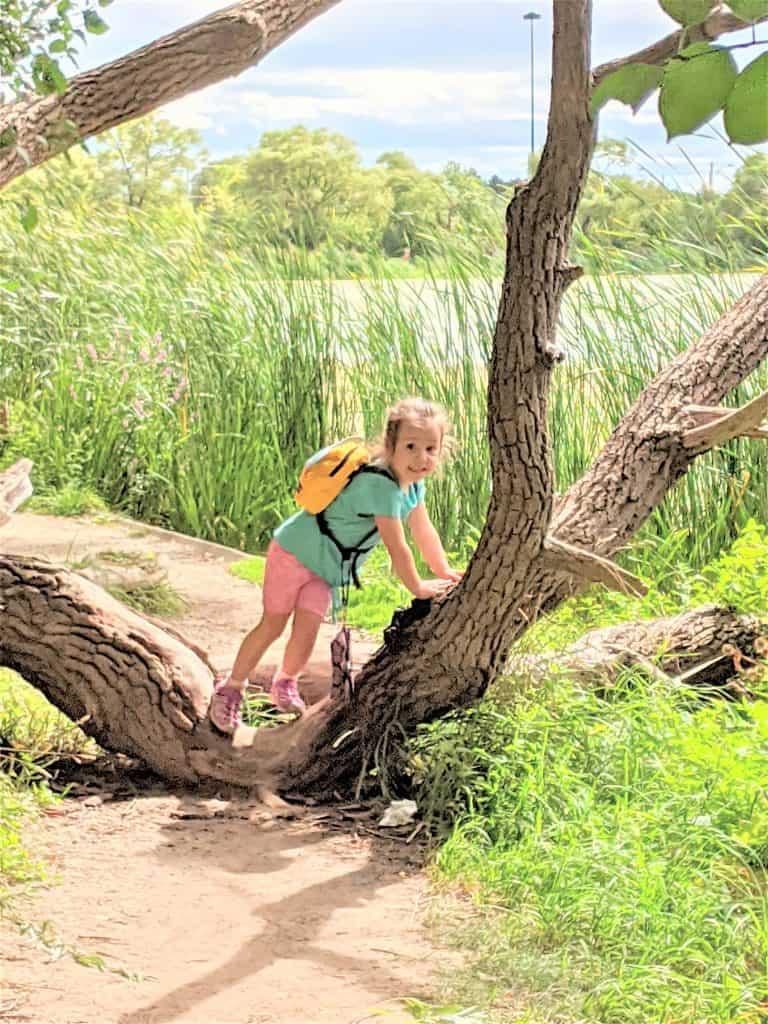 girl climbing tree in high park by grenadier pond