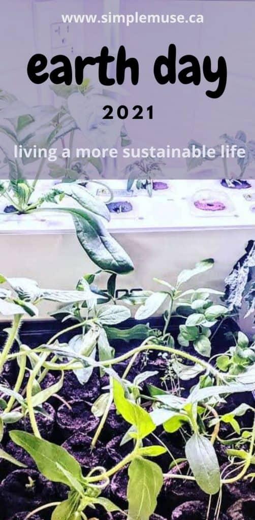herbs and vegetable indoor garden