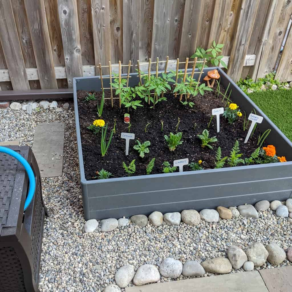 pebbles around a raised flower bed filled with vegetables and marigolds