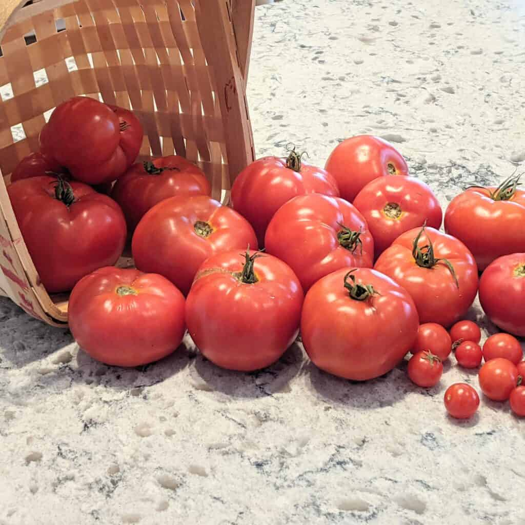 tomatoes rolling out of a basket